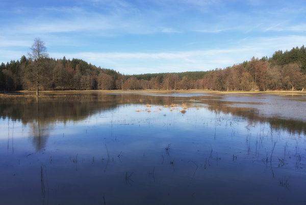 2019 - die Pegnitz bei Hochwasser